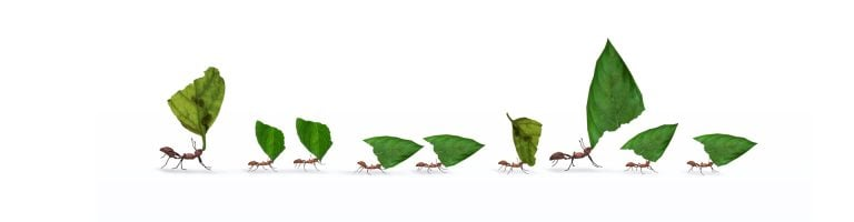 Ants with leaves