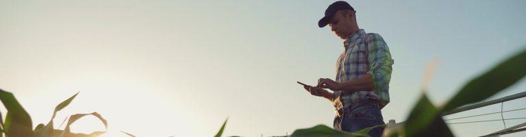 Farmer analyzing crops in a field