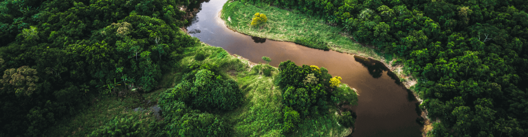 Panorama of trees and river
