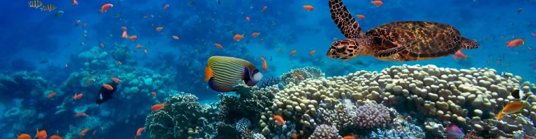 Coral reef and its inhabitants
