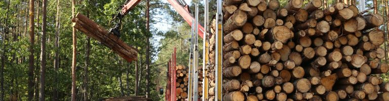 Truck picking up timber logs in the forest
